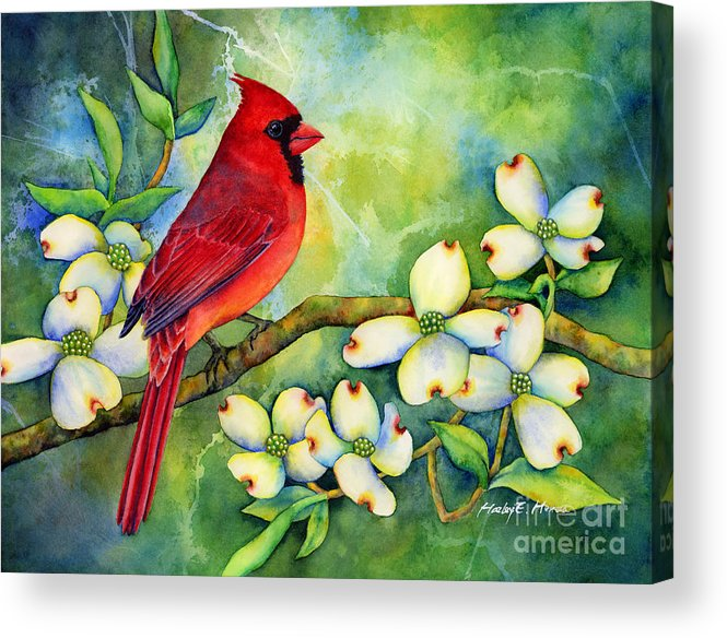 Cardinal Acrylic Print featuring the painting Cardinal on Dogwood by Hailey E Herrera
