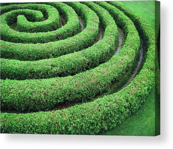 Tranquility Acrylic Print featuring the photograph Cedar Maze by Francois Dion