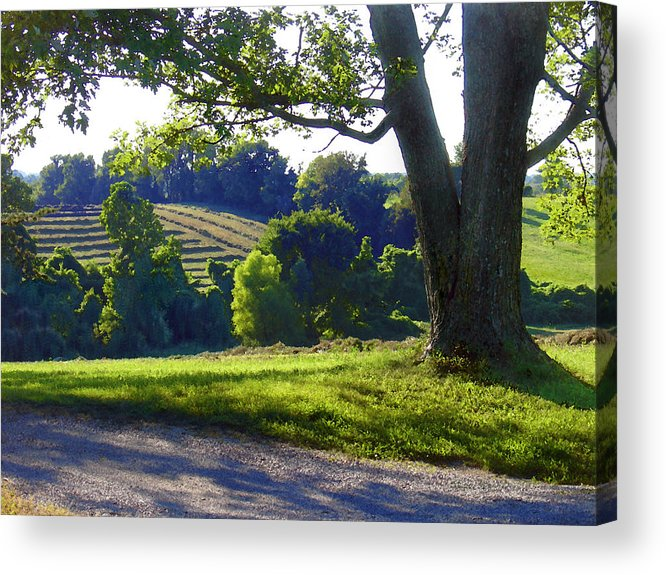 Landscape Acrylic Print featuring the photograph Country Landscape by Steve Karol