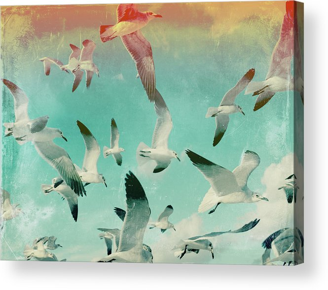 Animal Themes Acrylic Print featuring the photograph Flock Of Seagulls, Miami Beach by Michael Sugrue