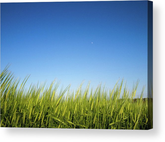 Tranquility Acrylic Print featuring the photograph Harvest Moon by © Peter Lourenco