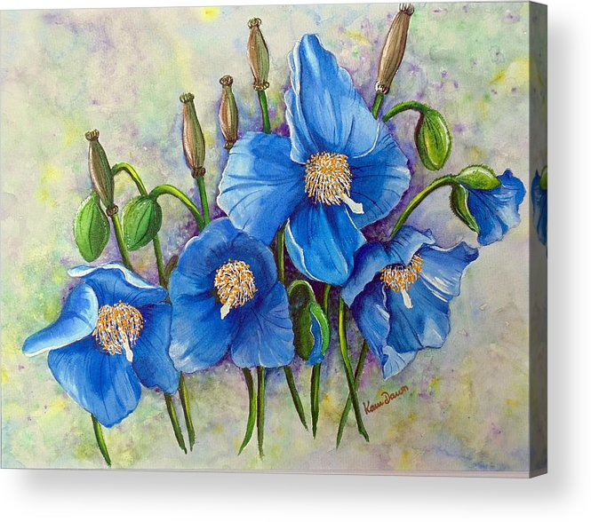 Blue Hymalayan Poppy Acrylic Print featuring the painting MECONOPSIS  Himalayan Blue Poppy by Karin Dawn Kelshall- Best