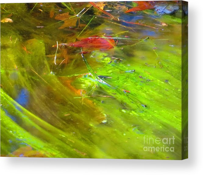 Photography Acrylic Print featuring the photograph Mothers abstract 05 by Rrrose Pix