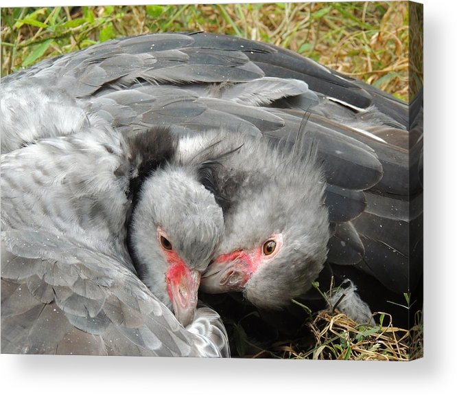 Birds Acrylic Print featuring the photograph Now This Is Love by Judy Waller
