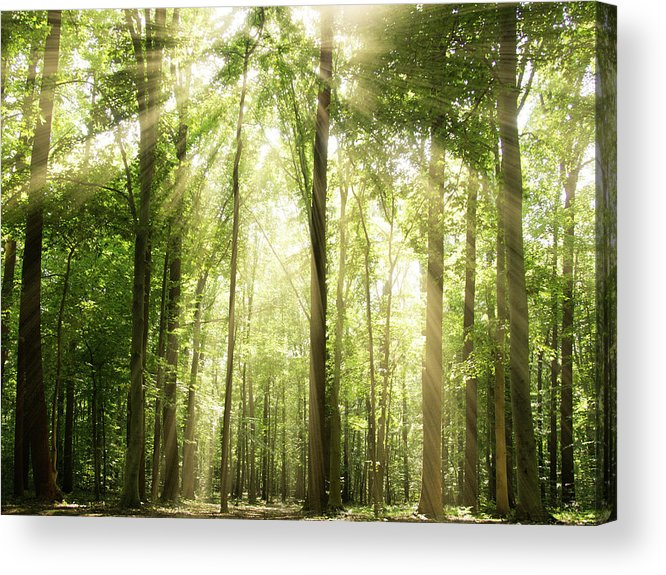 Tranquility Acrylic Print featuring the photograph Sunrays Through Treetops by Melissa Fague