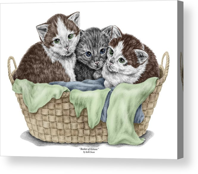Basket Of Kittens Cats Art Print Color Tinted Acrylic Print By Kelli Swan