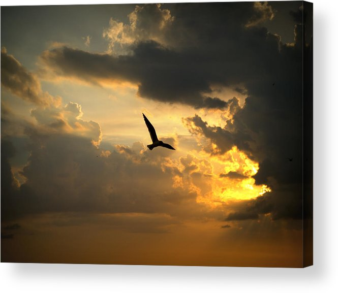 Heaven Acrylic Print featuring the photograph Free by Judy Waller
