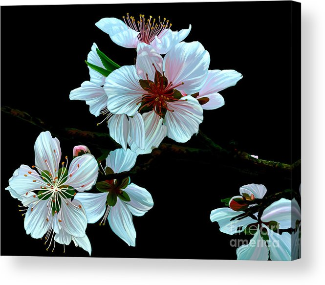 Fine Art Acrylic Print featuring the painting Just Peachy by Patricia Griffin Brett