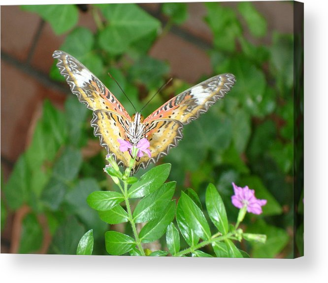 Nature Acrylic Print featuring the photograph A Moment In Time by Robyn Leakey