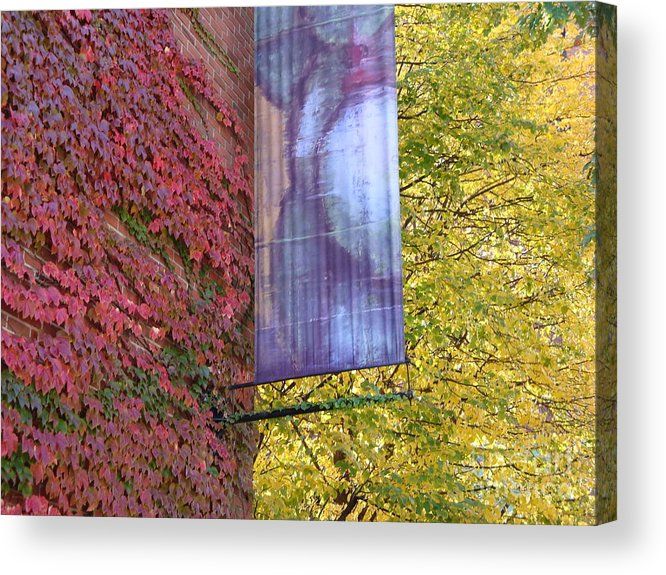 Red Leaves Acrylic Print featuring the photograph Autum colors by Robyn Leakey