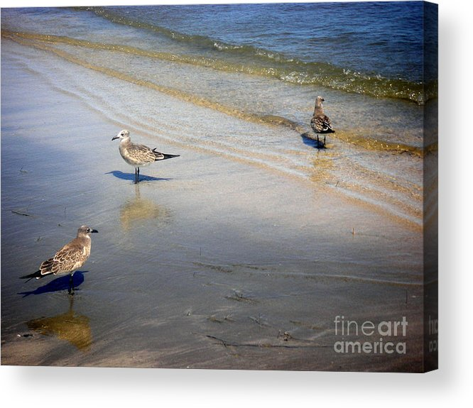 Nature Acrylic Print featuring the photograph Creatures Of The Gulf - Which Way by Lucyna A M Green