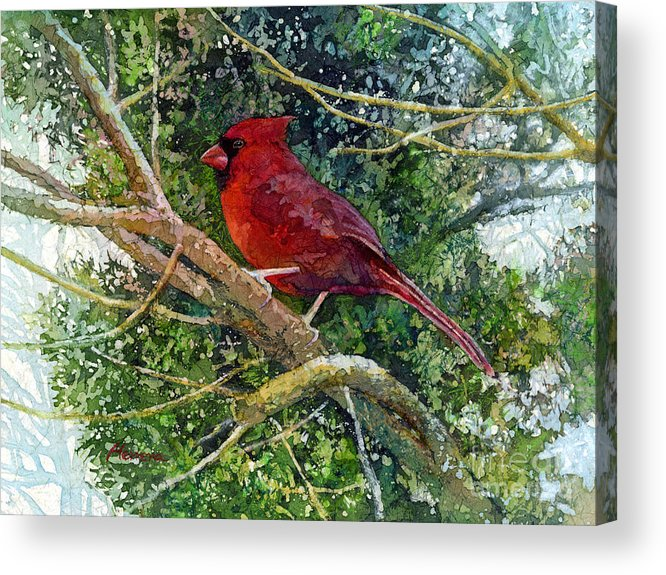 Cardinal Acrylic Print featuring the painting Elegance in Red by Hailey E Herrera