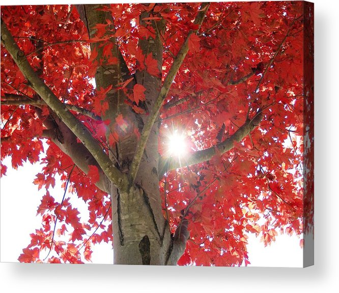 fall Leaves Acrylic Print featuring the photograph Fall in Georgia by Linda Russell