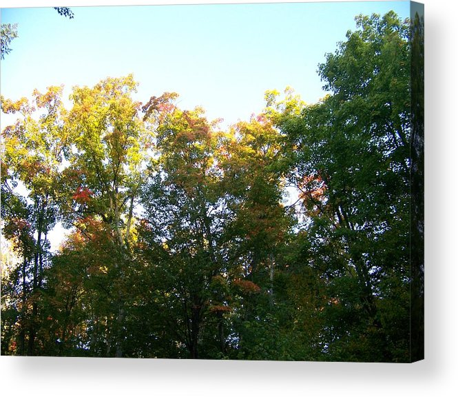Trees Acrylic Print featuring the photograph Fall Is In The Air by Jackie Mueller-Jones