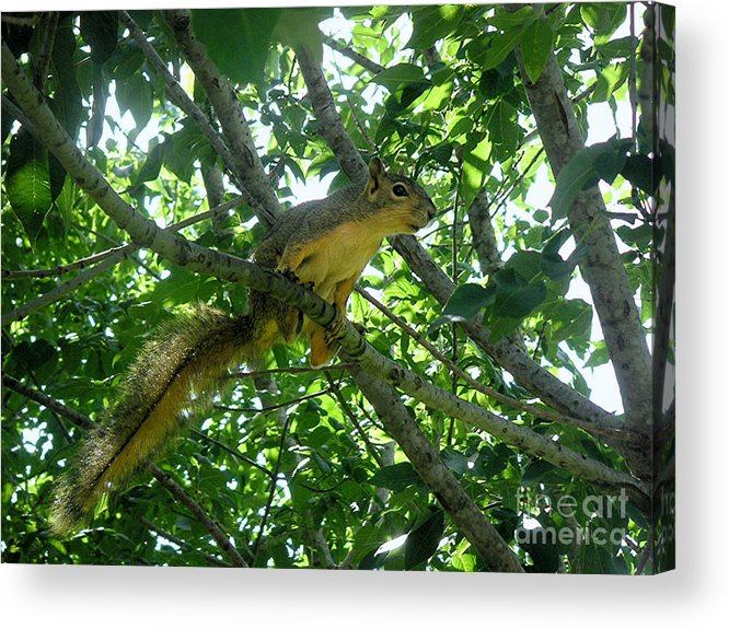 Nature Acrylic Print featuring the photograph Getting A Grip by Lucyna A M Green