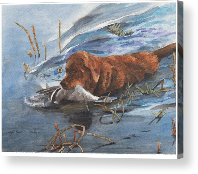Www.miketheuer.com Golden Retriever With Duck Watercolor Portrait Acrylic Print featuring the drawing Golden Retriever With Duck by Mike Theuer