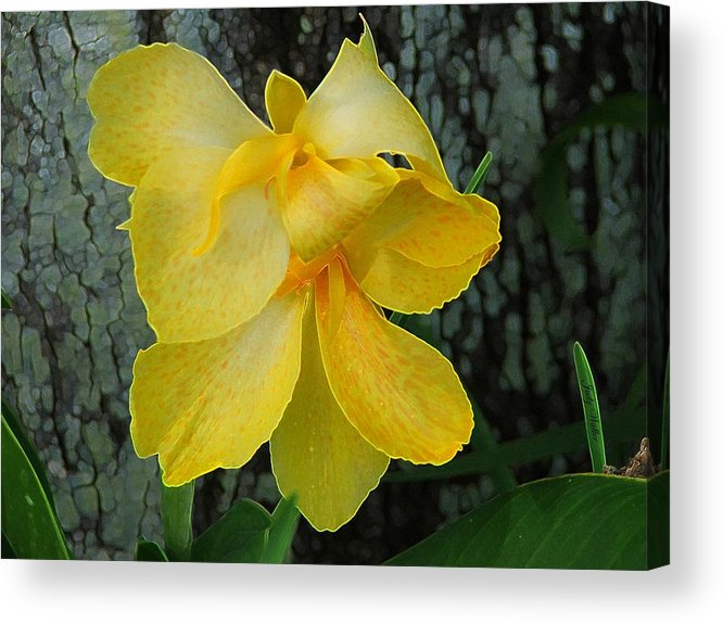Yellow Acrylic Print featuring the photograph Lemon Yellow by Judy Waller