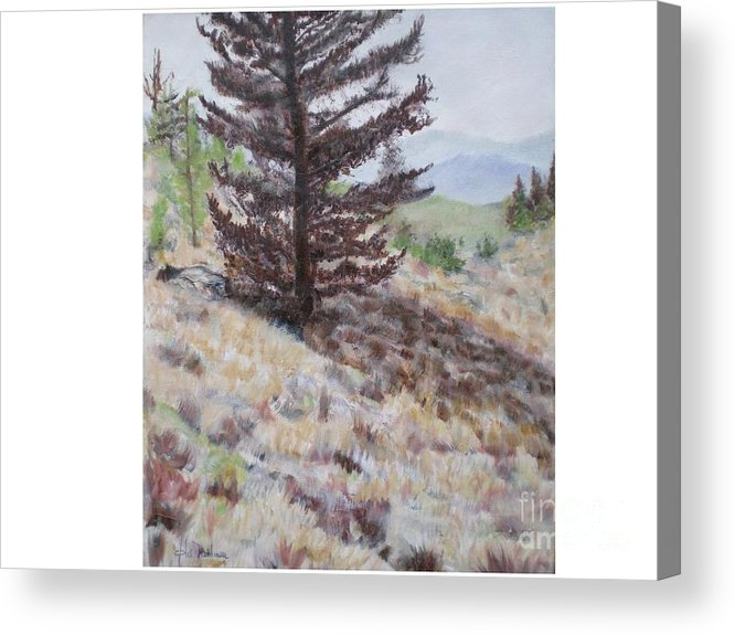 Bear Tree Acrylic Print featuring the painting Lone Mountain Tree by Hal Newhouser