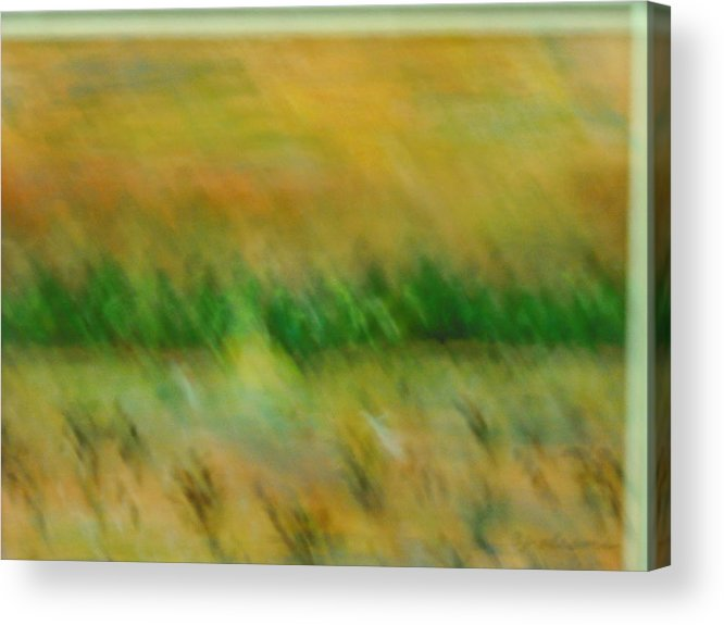 Water Acrylic Print featuring the painting Morning on the lake with whooping cranes by BJ Abrams