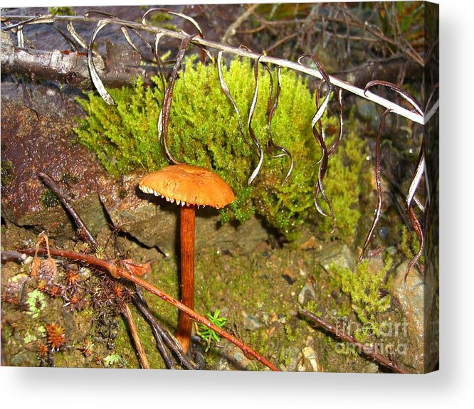 Mushroom Acrylic Print featuring the photograph Mushroom Microcosm by Jim Thomson