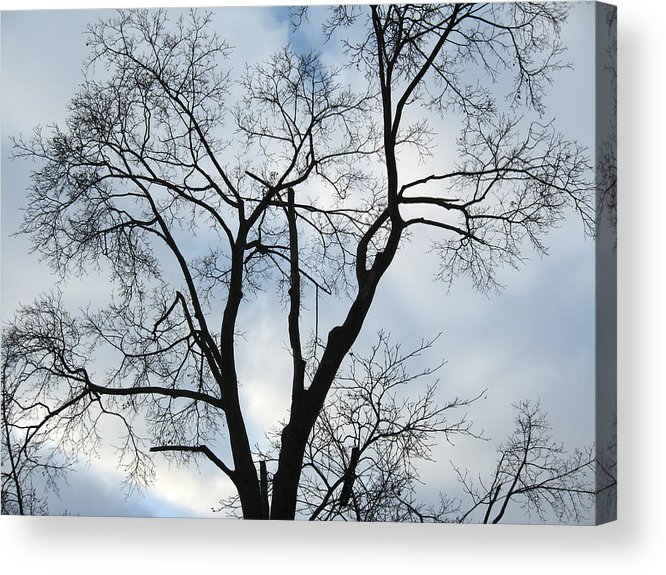 Nature Acrylic Print featuring the photograph Nature - Tree in Toronto by Munir Alawi