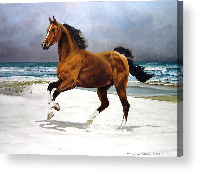Horse Acrylic Print featuring the painting On The Beach by Marc Stewart