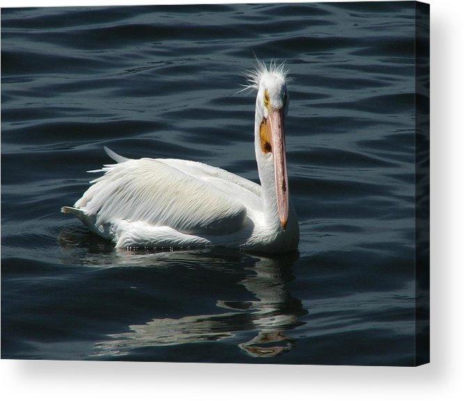 Water Acrylic Print featuring the digital art Punk Pelican by Judy Waller