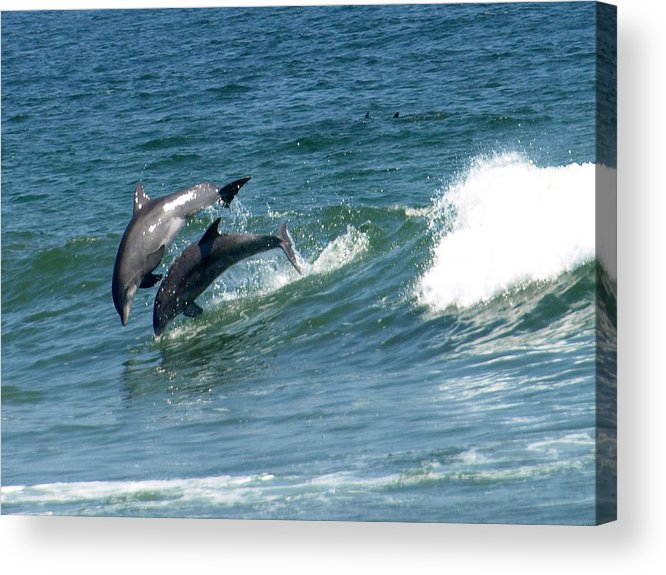 Dolphins Acrylic Print featuring the painting Rolling Wave by Kim