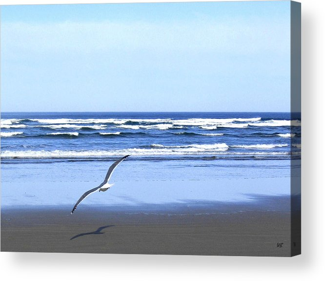 Seagull Acrylic Print featuring the photograph Shadow On The Sand by Will Borden