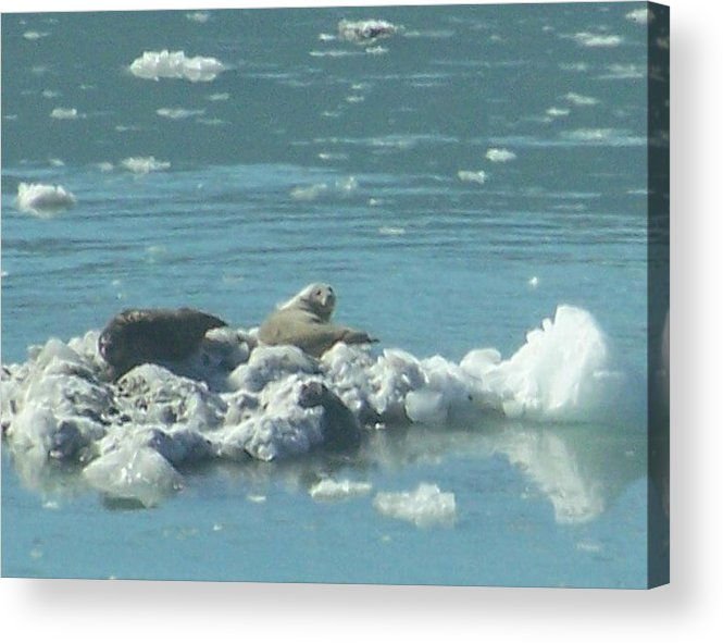 Nature Acrylic Print featuring the photograph Sunning Seals by George Pasini
