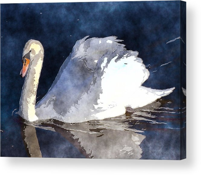 Swan Acrylic Print featuring the photograph Swan by David G Paul