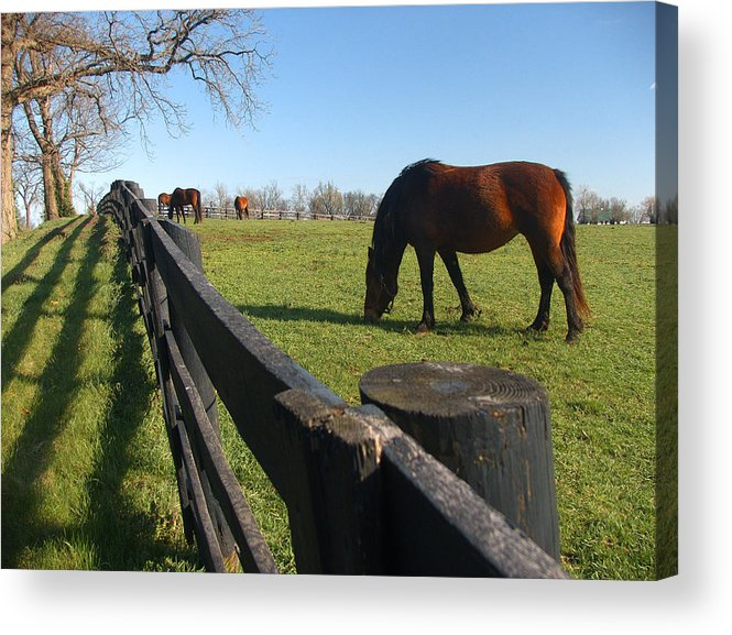 Horse Acrylic Print featuring the photograph Thoroughbred Horses in Kentucky Pasture by Dave Chafin