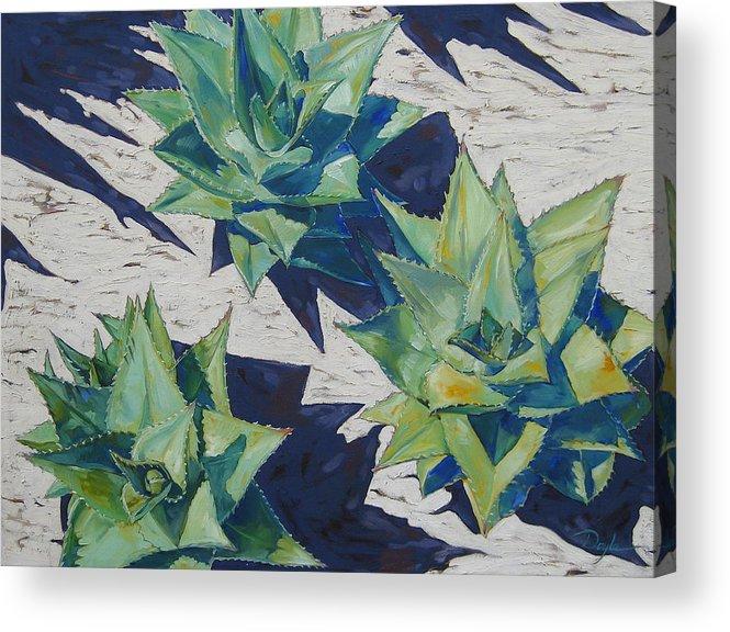 Botanical Acrylic Print featuring the painting Three Aloe by Karen Doyle