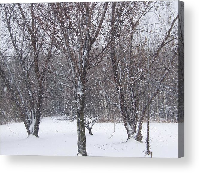 Snow Acrylic Print featuring the photograph Today - November 25 - Photograph by Jackie Mueller-Jones