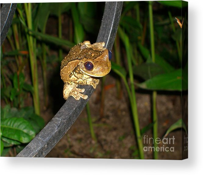 Tree Acrylic Print featuring the photograph TreeFrog by Jim Thomson