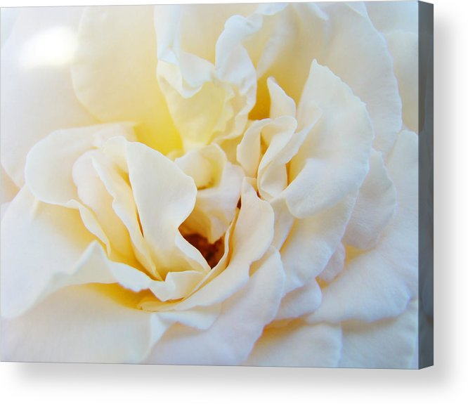 Rose Acrylic Print featuring the photograph White Creamy Pastel Rose Flower Baslee Troutman by Patti Baslee