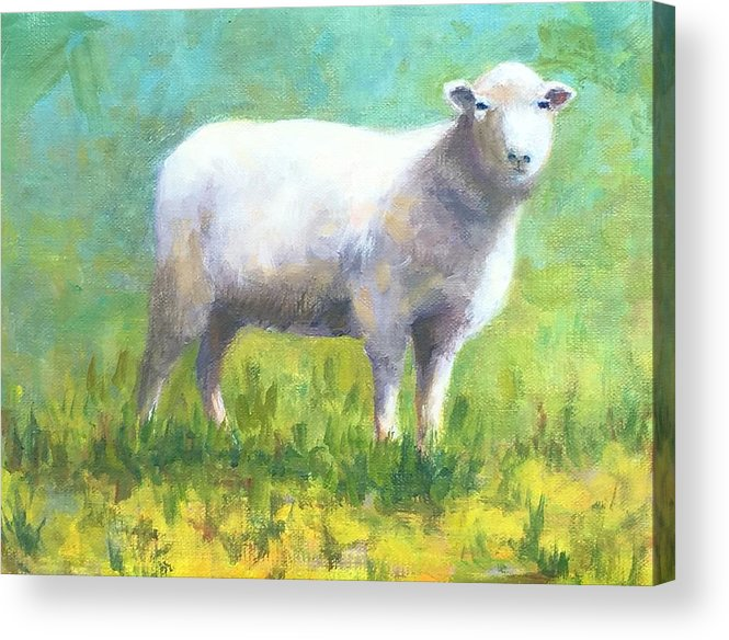 Wool Acrylic Print featuring the painting Woolly by Barrett Edwards