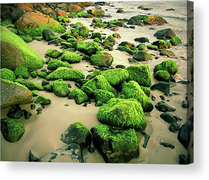 Tranquility Acrylic Print featuring the photograph Beach Rocks Covered With Seaweed by Andre Bernardo