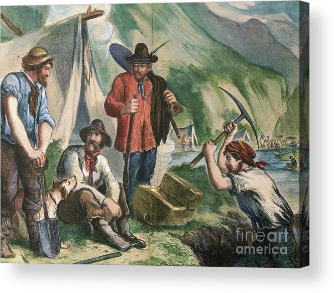 Miner Acrylic Print featuring the photograph California Gold Diggers Illustration by Bettmann