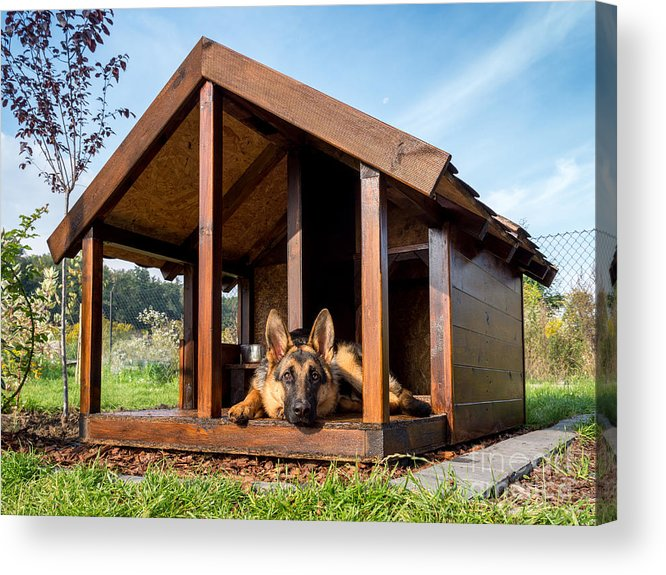 Yard Acrylic Print featuring the photograph German Shepherd Resting In Its Wooden by Pryzmat