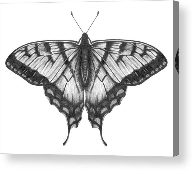 Art Acrylic Print featuring the digital art Graphite Illustration Of A Beautiful by Ranplett