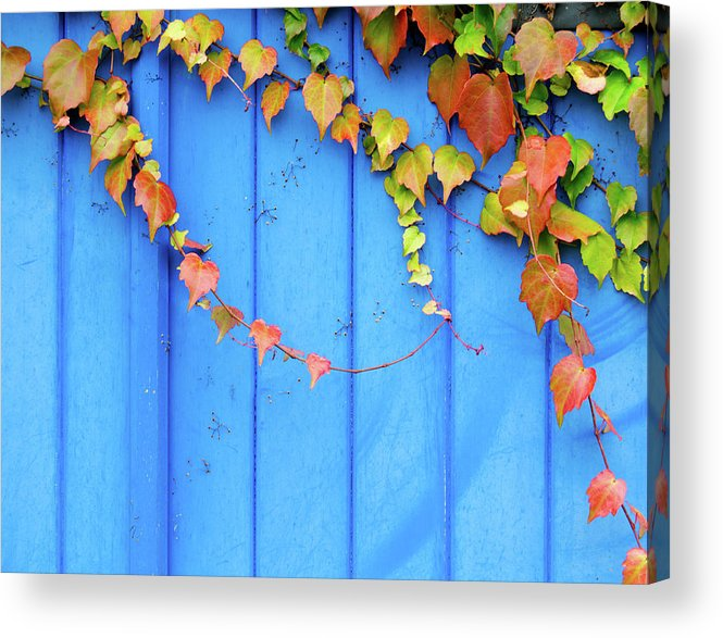 Architectural Feature Acrylic Print featuring the photograph Ivy On The Door by Zianlob