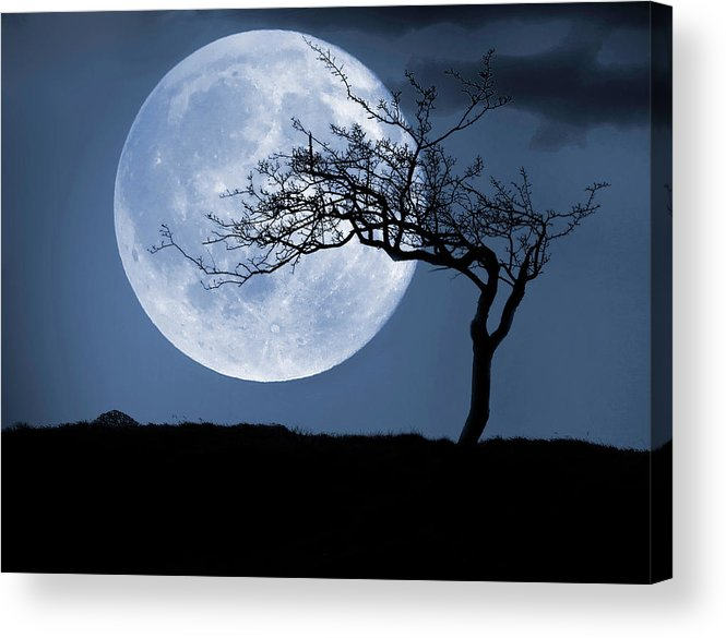 Scenics Acrylic Print featuring the photograph Treelight by Victor Walsh Photography