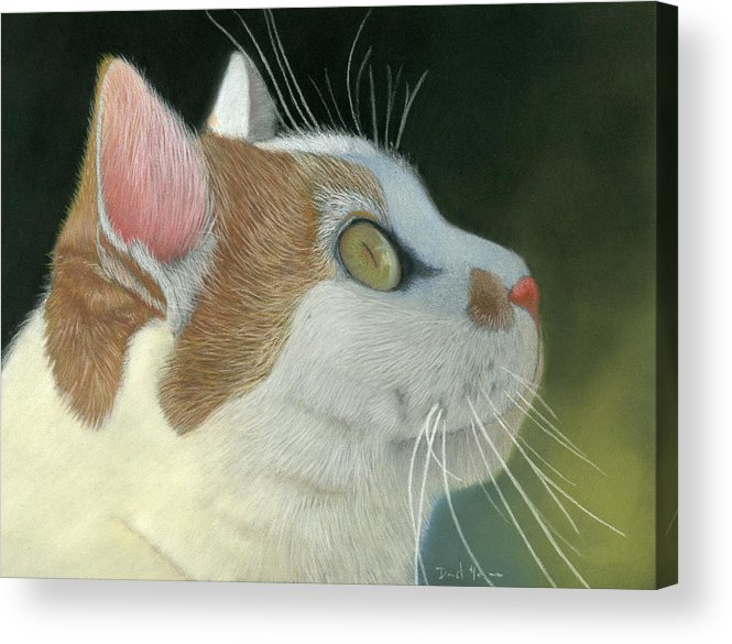 Cat Acrylic Print featuring the pastel Cat Portrait Pastel Painting by Dave Nevue