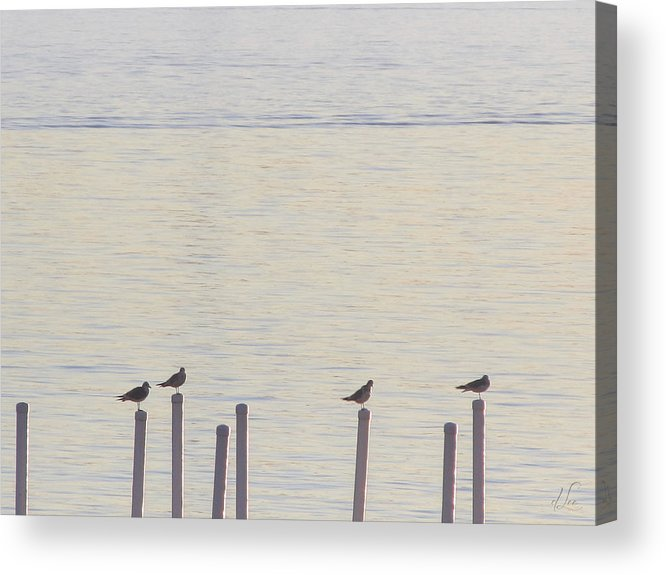 Seagulls Acrylic Print featuring the photograph Seagull Sentry by D Lee