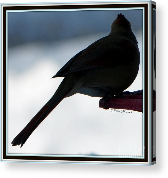 Bird Acrylic Print featuring the photograph The Vision by Rennae Christman