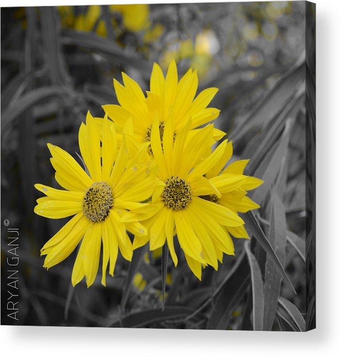 Yellow Acrylic Print featuring the photograph Sun is Up by Aryan Ganji