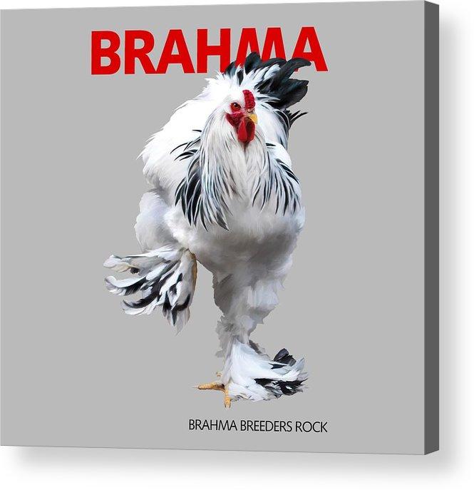 Brahma Acrylic Print featuring the digital art Brahma Breeders Rock RED by Sigrid Van Dort