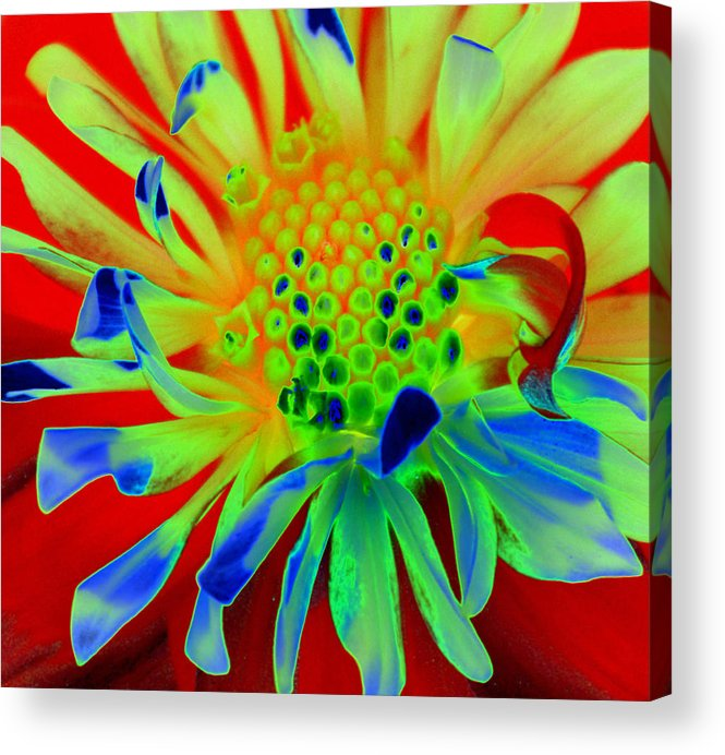 Diane Berry Acrylic Print featuring the painting Bright Flower by Diane E Berry