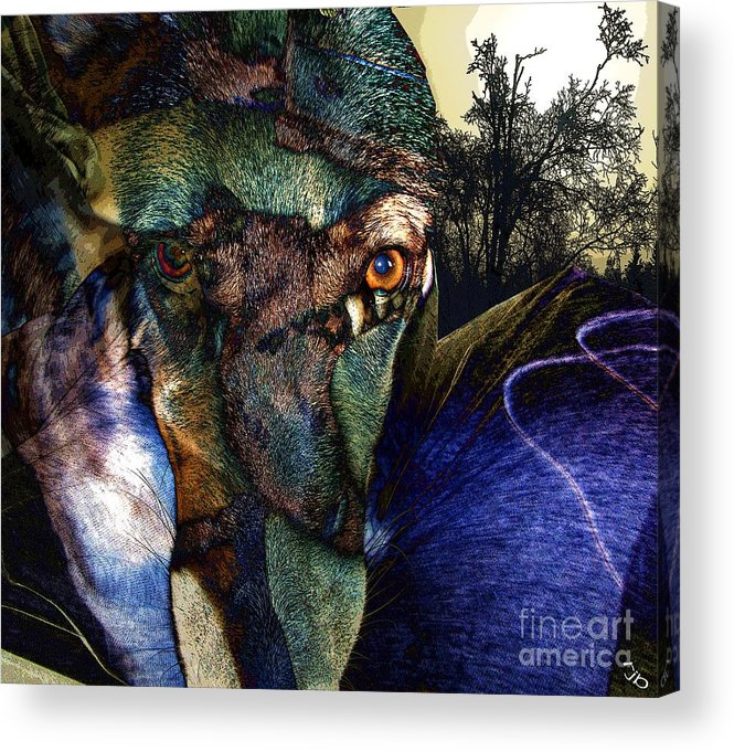 Dog Acrylic Print featuring the photograph Domesticated by Ron Bissett